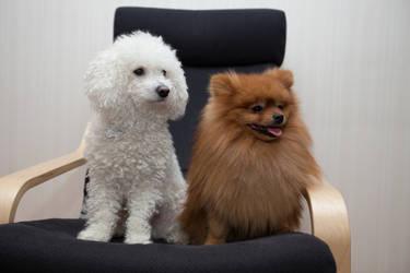 Milo and Simba