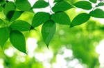 Green leaves by sovlanik