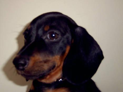 Little Dogg