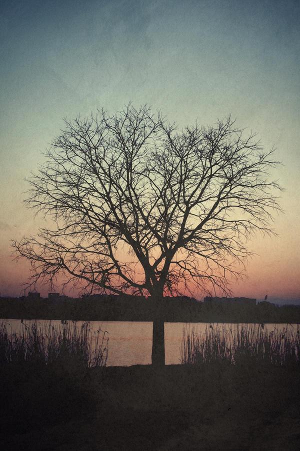 tree of dusk by purplecoke