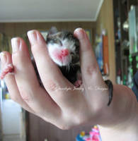 New Born Kitten by LadyStarrlight