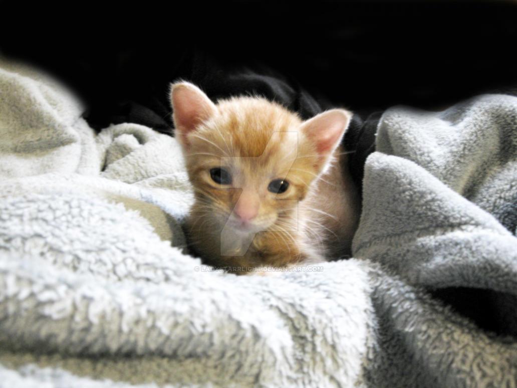 Orphan Kitten: Rufus by LadyStarrlight