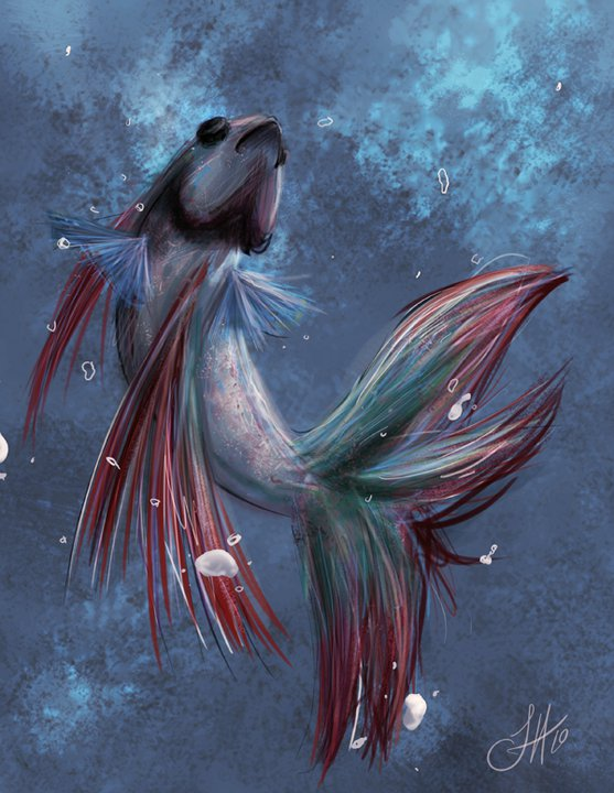 Betta fish by withoutname on deviantart for Good betta fish names