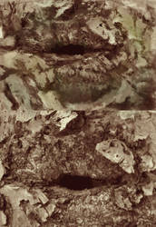 Bark study by Tygenja