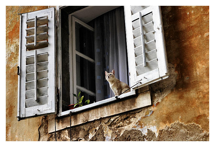 At The Window by AstralWind