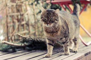 Catwalk by MrTaxiSock