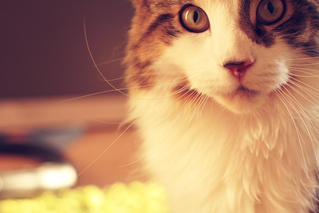 closeupcat by MrTaxiSock