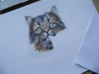 Curious cat - WIP II. by Mishice