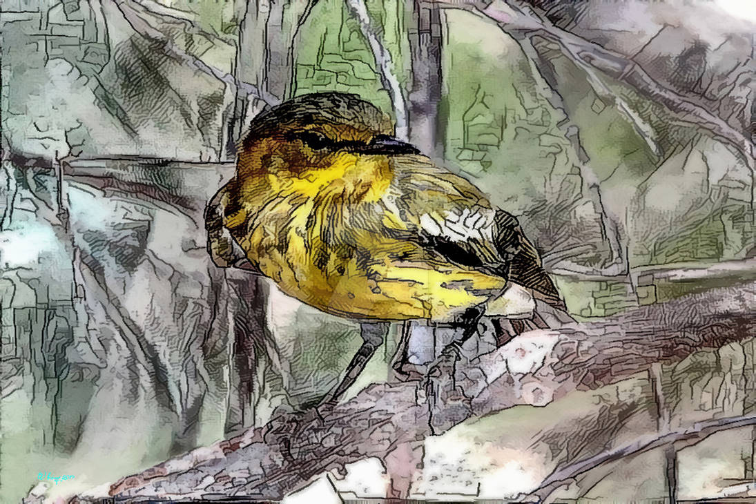 083 Cape May Warbler