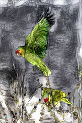 141 Red-lored Parrot