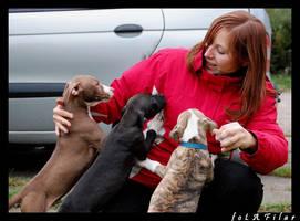 wsds pit pups by filarska