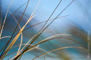 Beach Grass 1 by MaxK-W