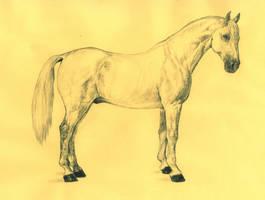 White Shagya Horse by GabrielGrob