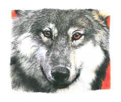 Wolf by GabrielGrob