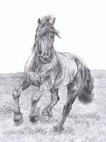 Friesian Horse Sketch by GabrielGrob