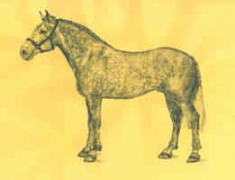 Irish Draught Horse by GabrielGrob