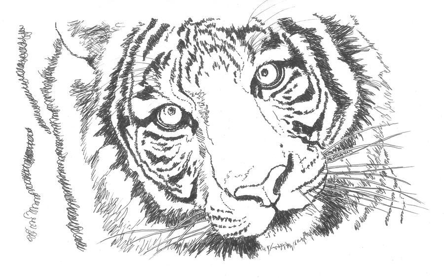 Tigre Sketch: Sketch By GabrielGrob On DeviantArt
