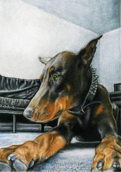 Doberman Portrait by GabrielGrob