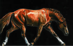 Trotting Horse by GabrielGrob