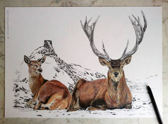 Deers (commissioned) 3rd picture