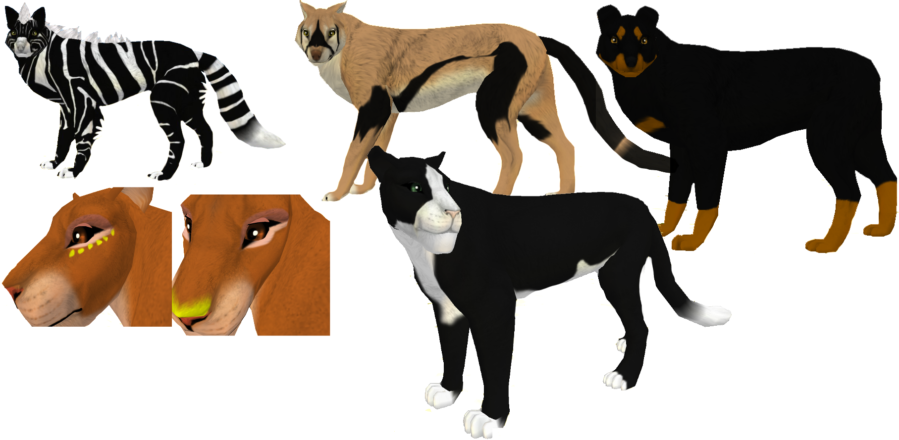 animal markings