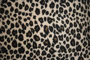 Texture: Animal Print 2 by pandora1921