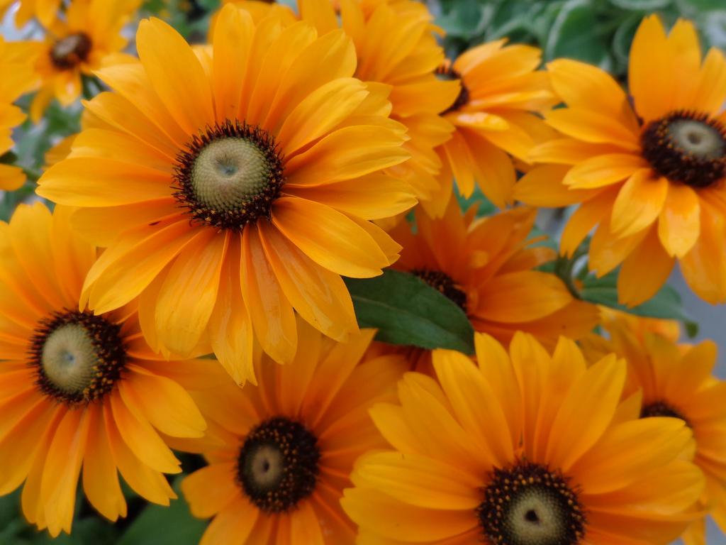 Sunshine Daisies by phantaz