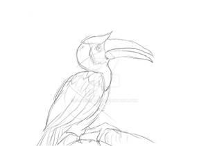 Random Bird Sketch