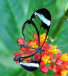 Butterfly by Batbreath