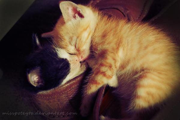 sleep tight by missPoteyto