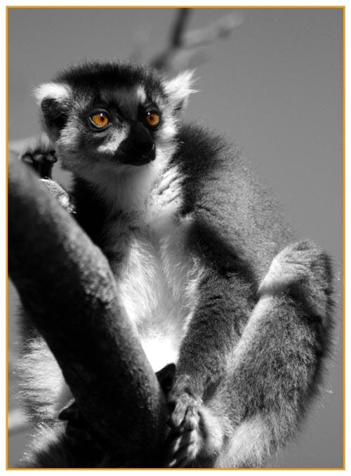 Lemurien by MarinaC13
