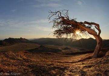 Star burst Shepherds tree by Shem-inja