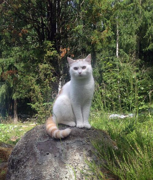 Viljo on the rock by HarHon