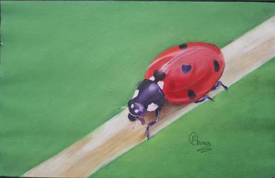 lonely lady bug by rhishabh