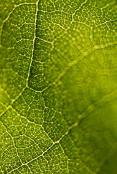 Leaf - Hires 01 by haakenson-stock