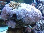 Aquarium pt.1 (Creature)