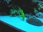 Aquarium pt.3