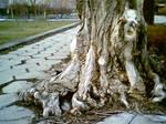 Old Tree vs. Civilization
