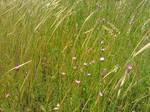 In a Tall Grass
