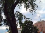 Birdie on a Tree