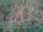 Little flower in autumn grass