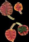 Leaf Stock 4