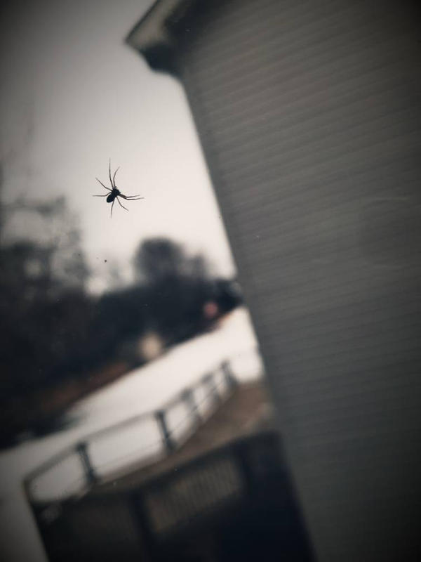 tiny window climber by DemonDamon97
