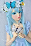 Mariposa - the blue butterfly 02