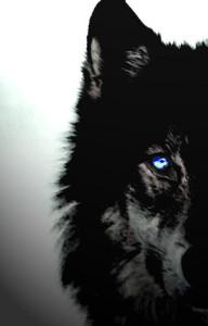 Johmu's Profile Picture