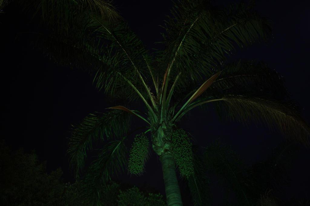Palm at Night by JPixZA