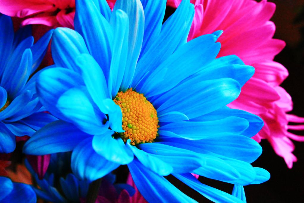 bright flower i by elysiameehan on deviantart