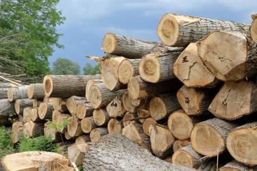 Logs #1 by Corvin0