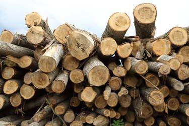 Logs #2 by Corvin0