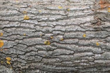 Tree Bark Texture #1 by Corvin0